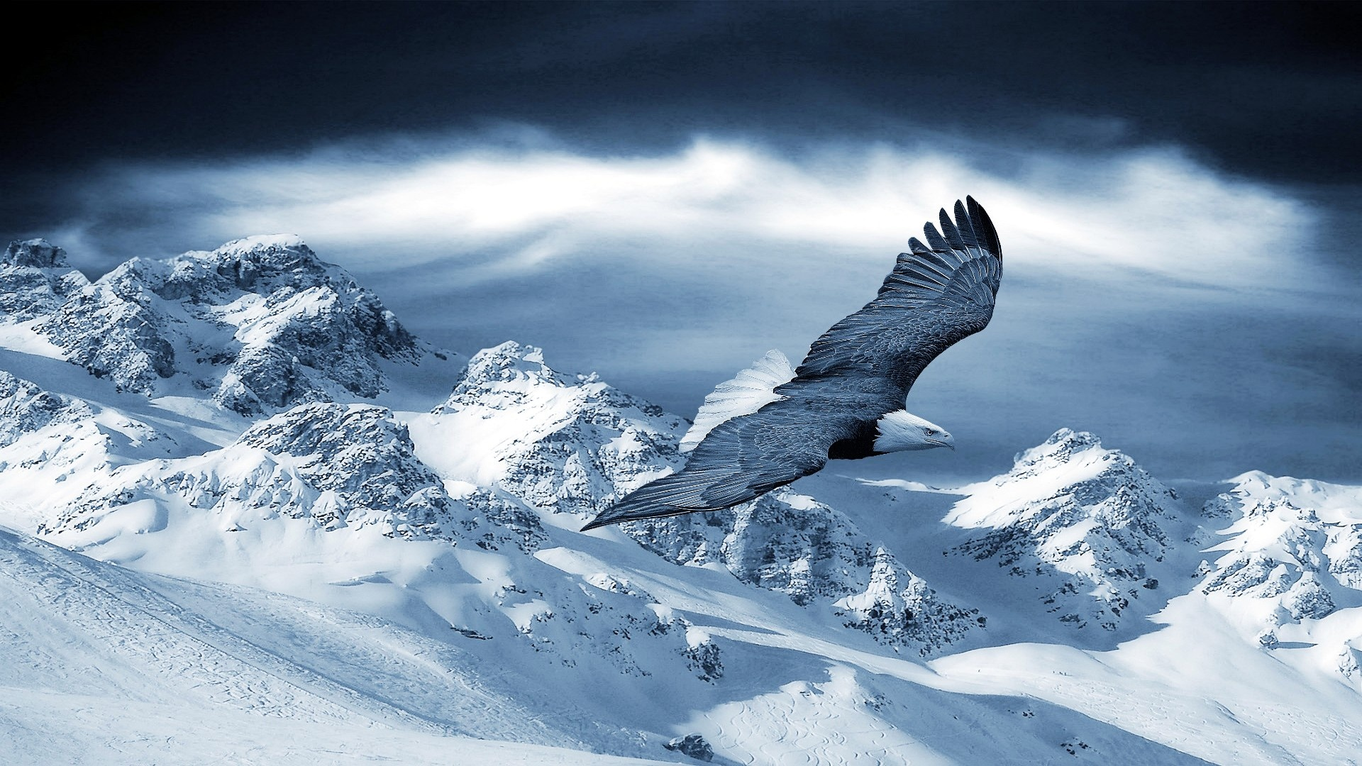 winter-Eagle-wallpaper-desktop-p423